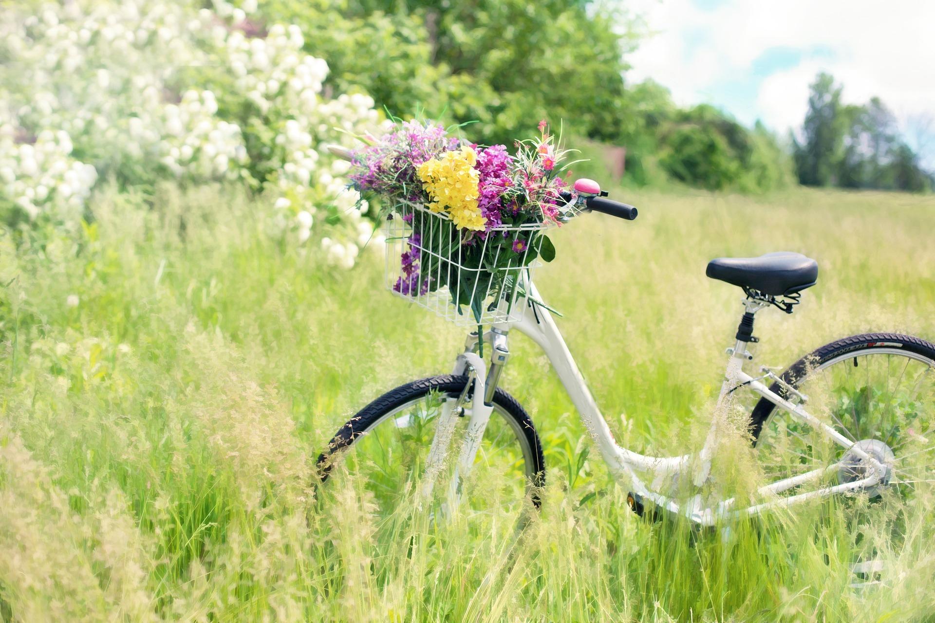 bicycle-788733_1920.jpg
