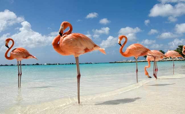 flamingo_650x400_41495651307.jpg