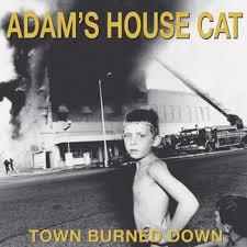 adams house cat.jpg