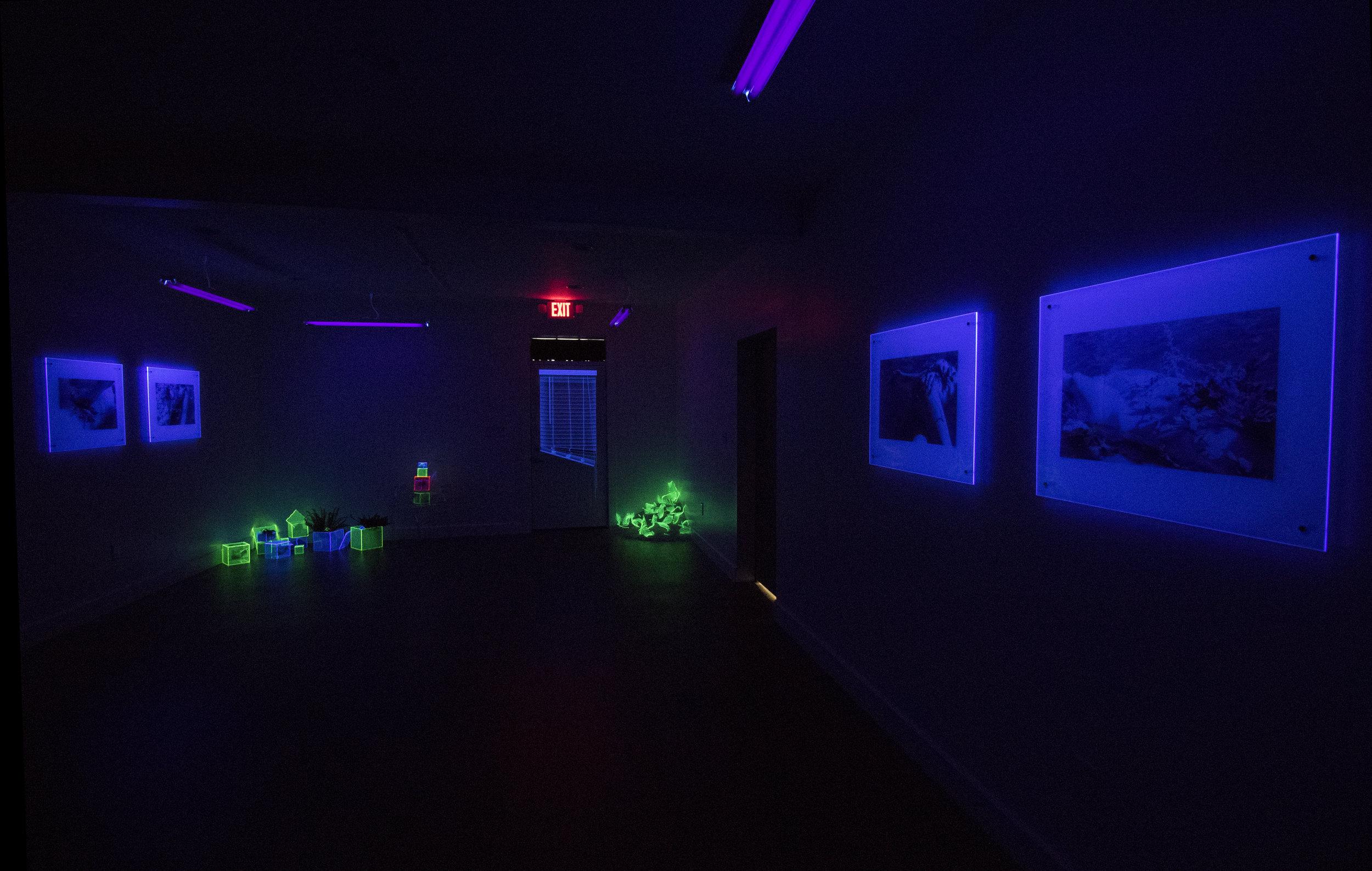 Radiation under black light at Cat Head Press
