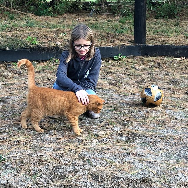 I love this pic because it shows other aspects of Safe Haven ♥️ No everything is equine assisted learning. Our barn kitties are therapeutic too and many of our participants enjoy kicking a soccer ball around or bumping a volleyball!