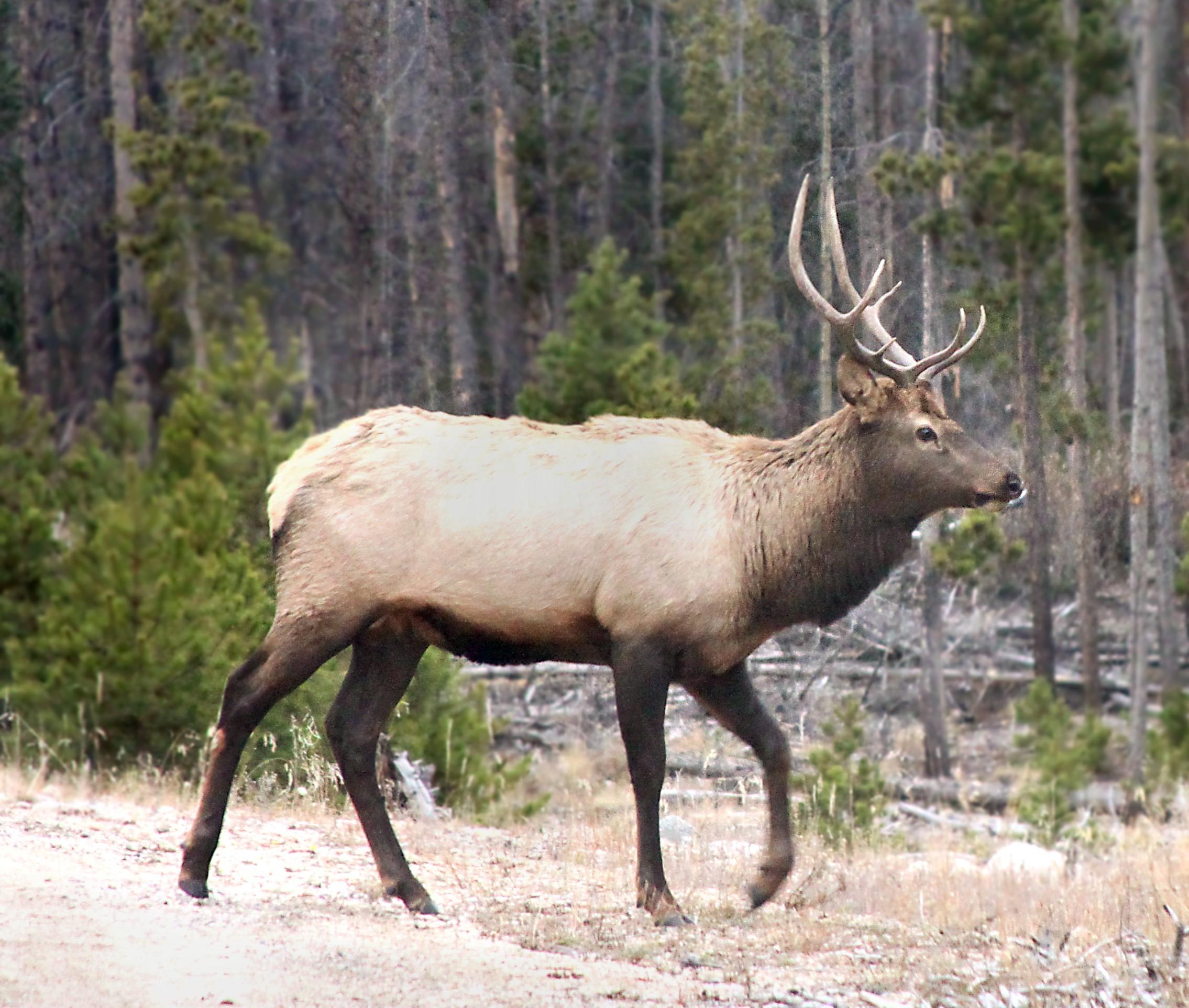 Elk-Fall RMNP (3).jpg