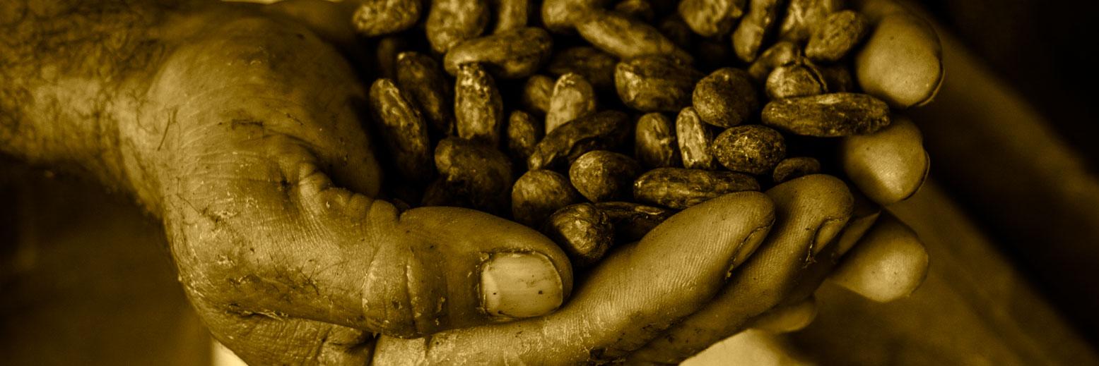solo-cacao.jpg