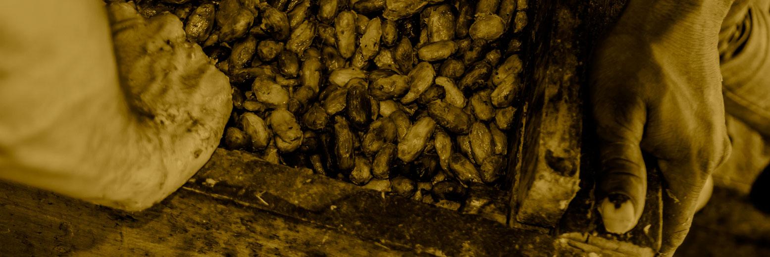 fermentacino.jpg