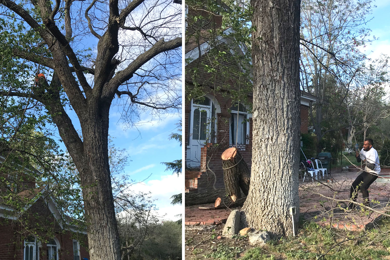 treetrimming.jpg