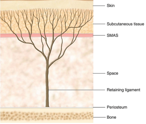 Tree structure RL.png
