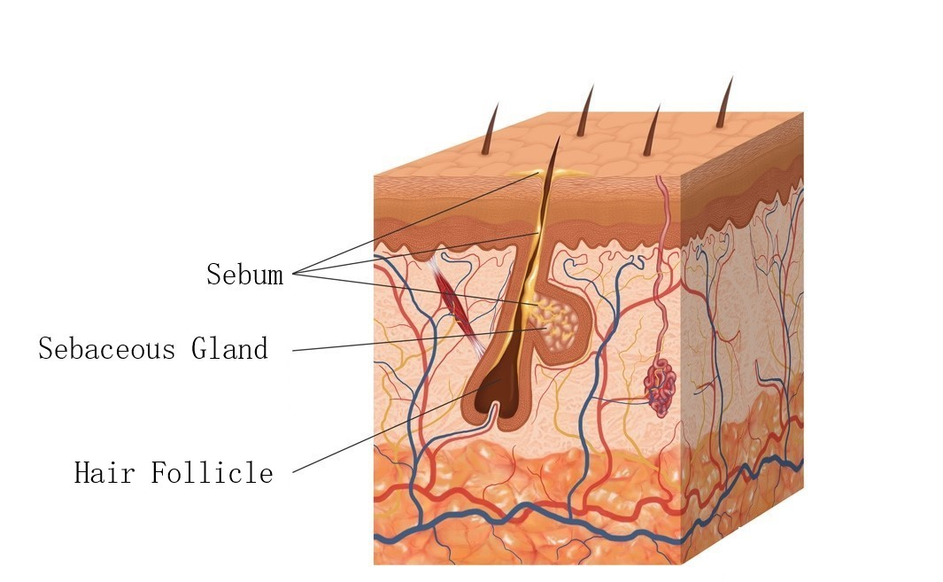 single follicle.jpg