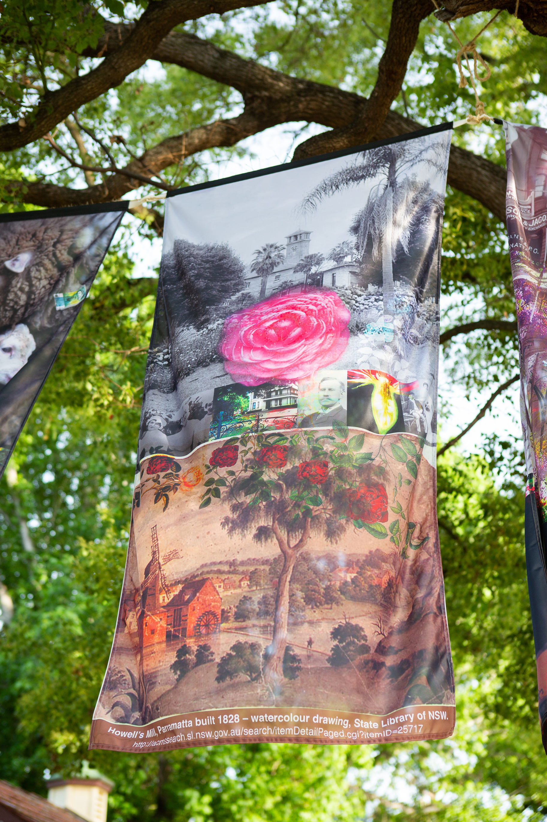 Tree Curtain featuring Prince William Camellia japonica  (1 of 56 forms bred) by Silas Sheather in Parramatta