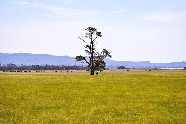 Endless #farmscape opportunities await as you cruise through #CradleCountry. Enjoy the scenery and drive safe!