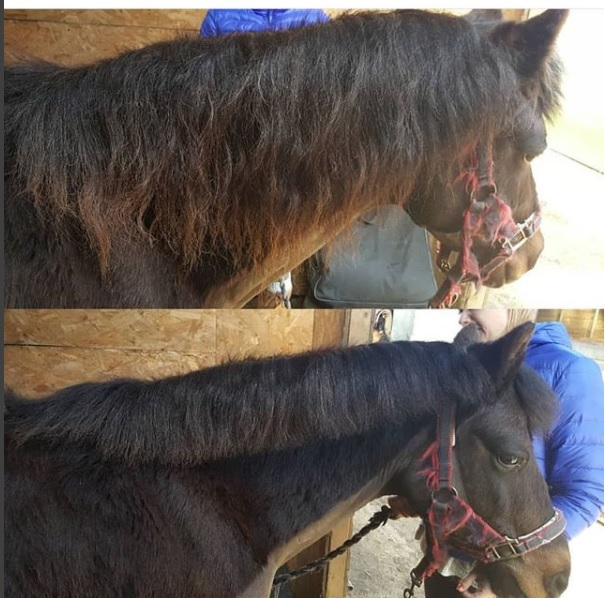 Jenny George Smart Manes before and after.jpg