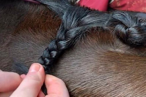 Plaiting Category Image.jpg