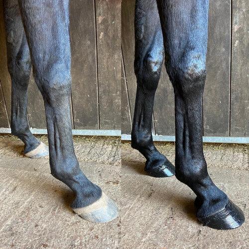 Leg Transformation, Lauren.jpg