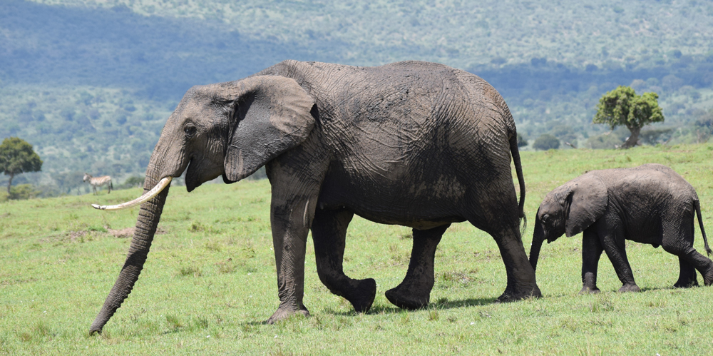 MMWCA-elephants.jpg