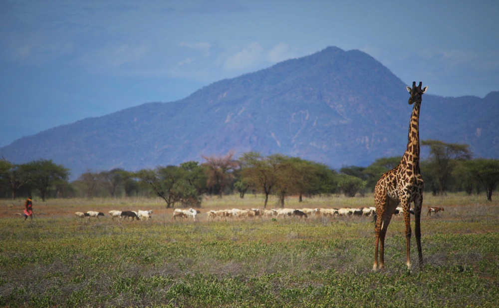 soralo-giraffe2.jpg