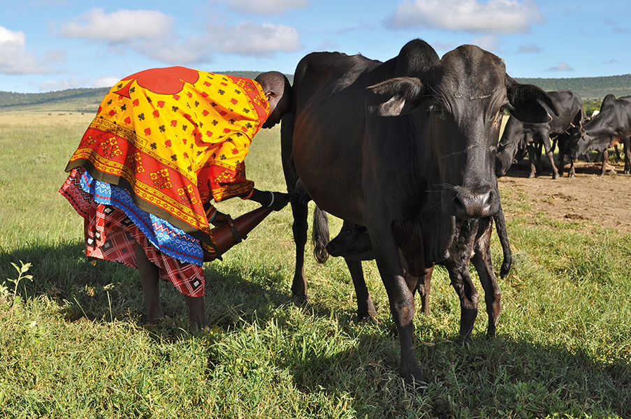 Pastoral Women's Council (PWC) - TANZANIA | Empowering Women to Improve their Livelihoods, Their Communities, and Their Environment
