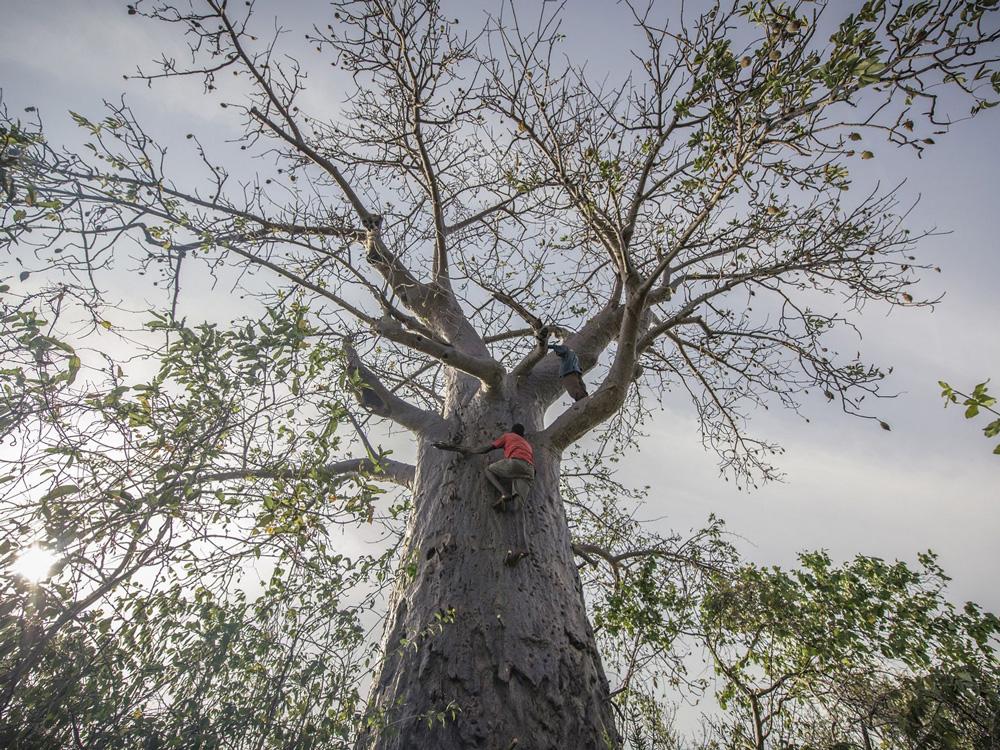TNC_Tree.jpg