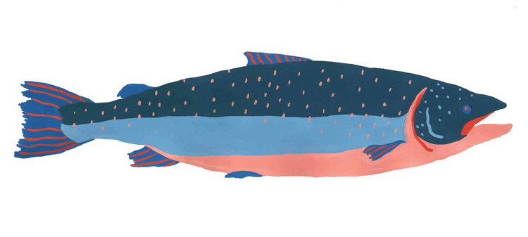 © 7 Salmon+Illustration.jpg