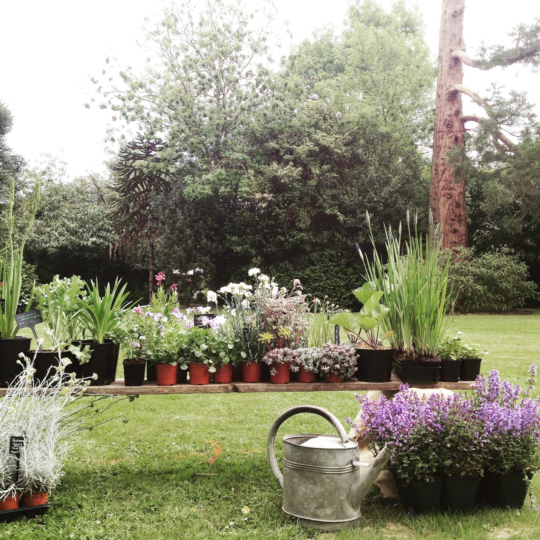 Fete des Plantes 1.JPG