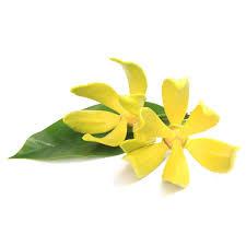 Ylang Ylang - Sweet, rich, spicy