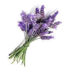 Lavender - Powdery, floral, light