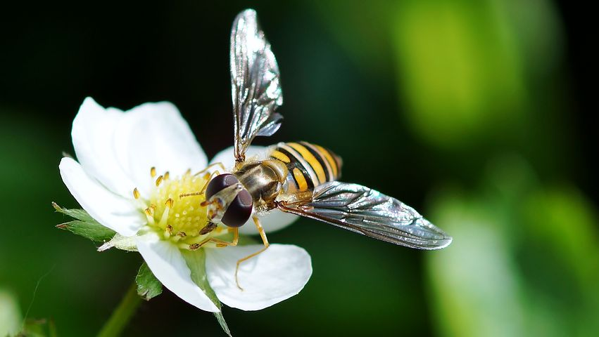 insect-3240508__480.jpg