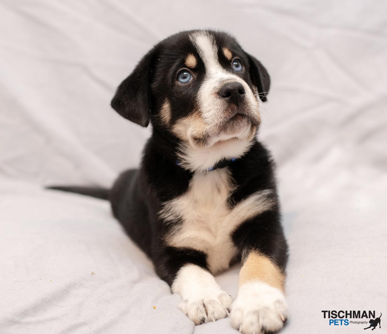 ADOPTED! Meet Beau