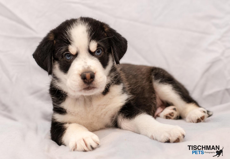 ADOPTED! Meet Humphrey