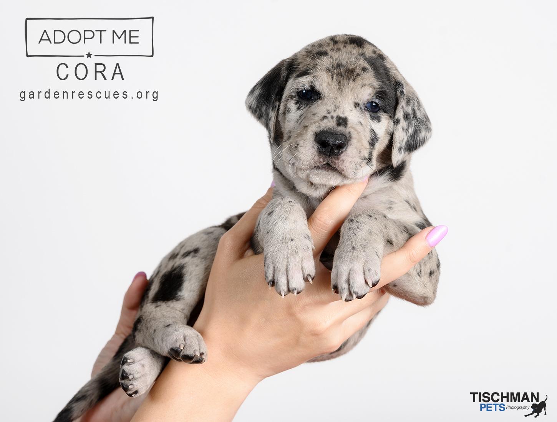 ADOPTED! Cora