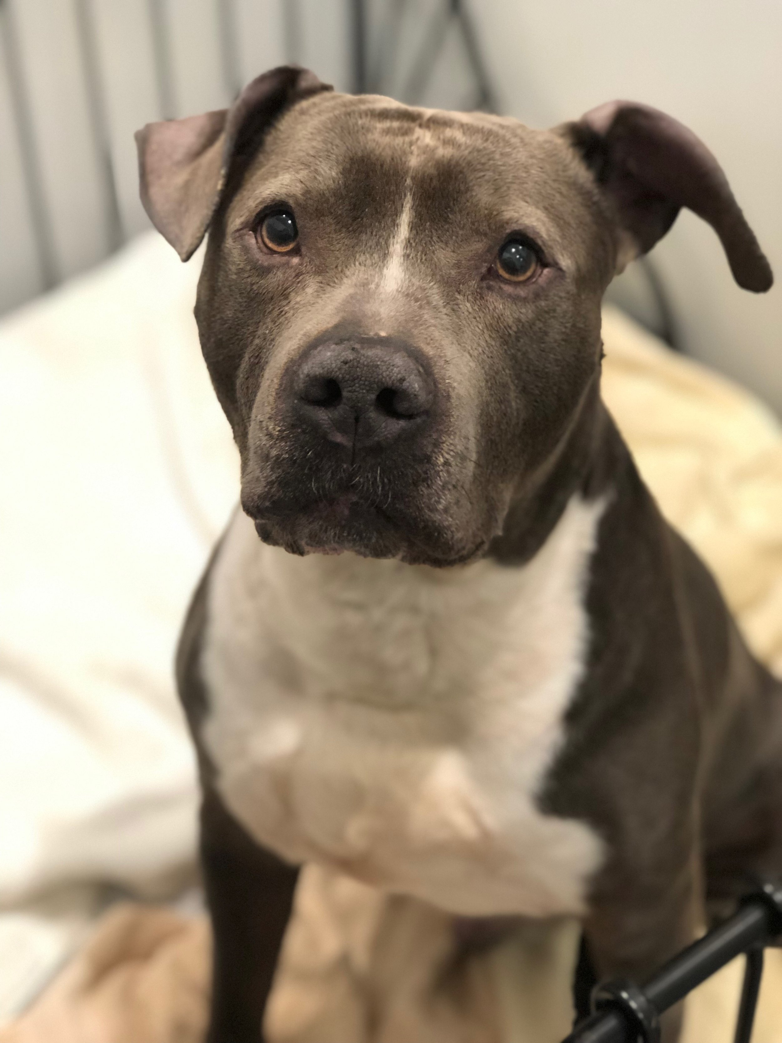 ADOPTED! Ronnie