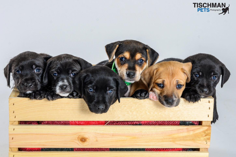 091319_Puppies_02w.jpg
