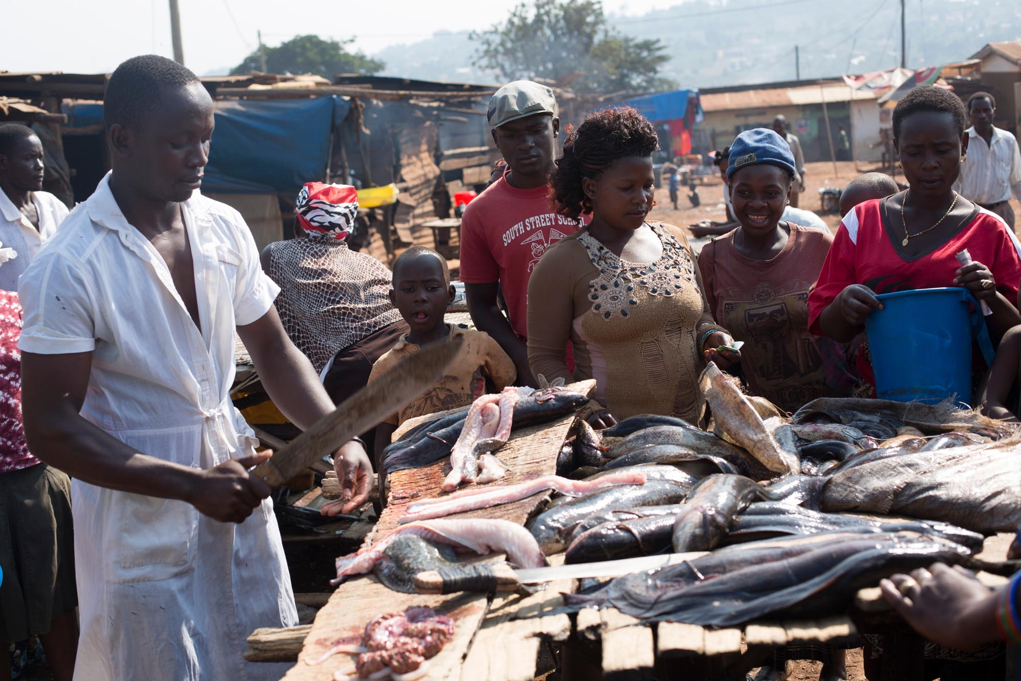 fish processing at local market, Uganda