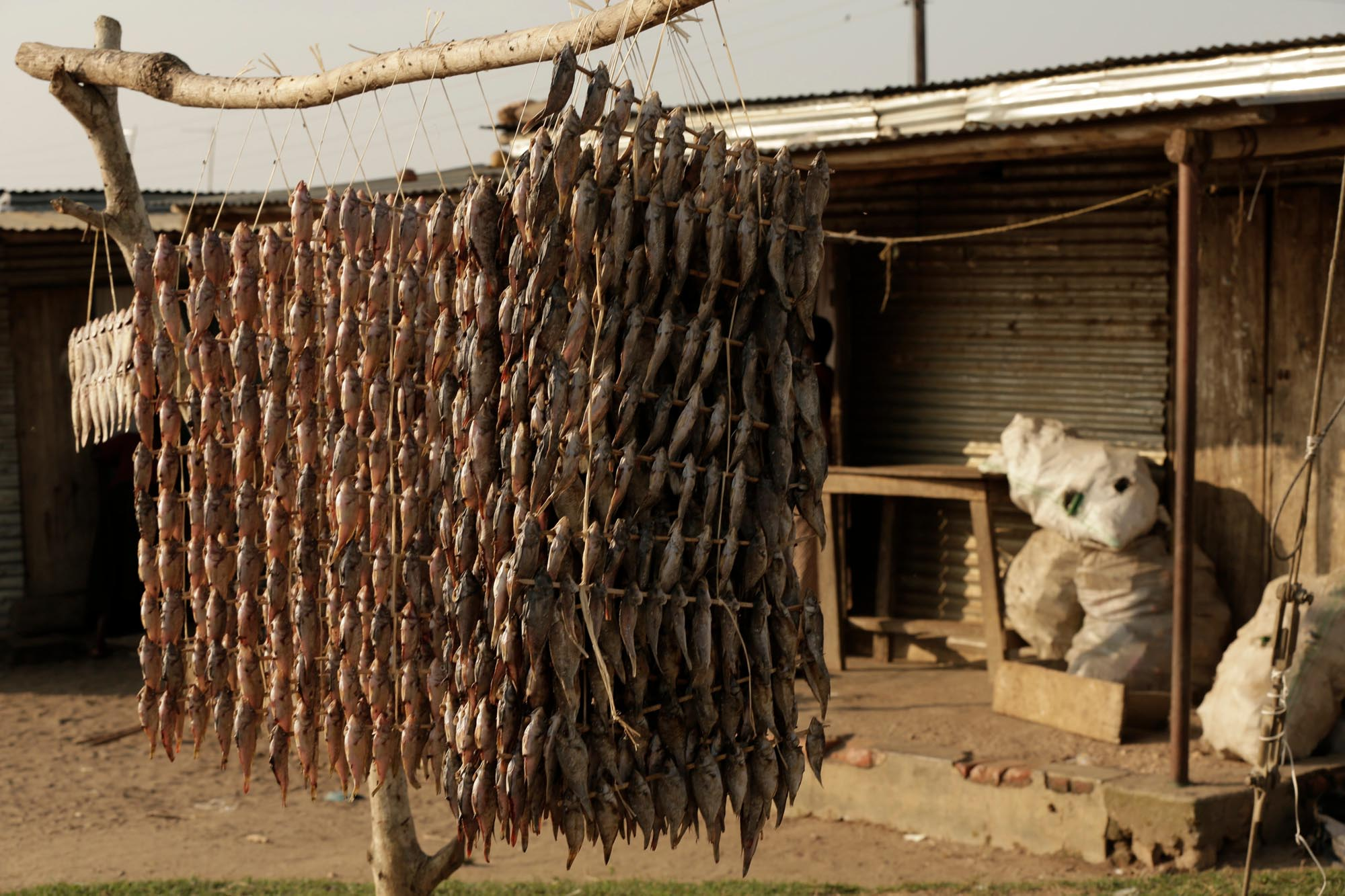Fish drying, Kachanga, Lake Victoria, Uganda