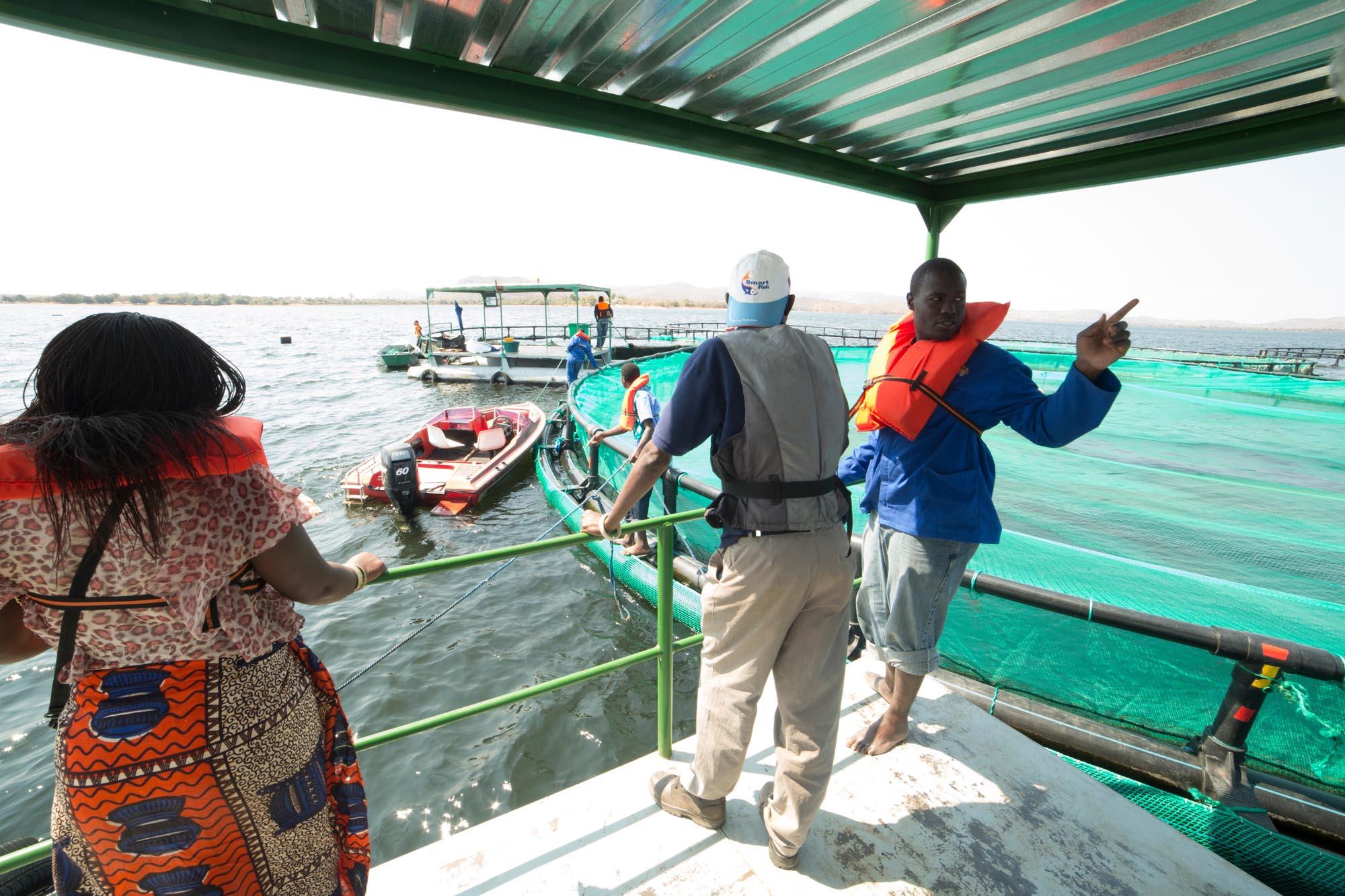 Yalelo cage operation on Lake Kariba Zambia