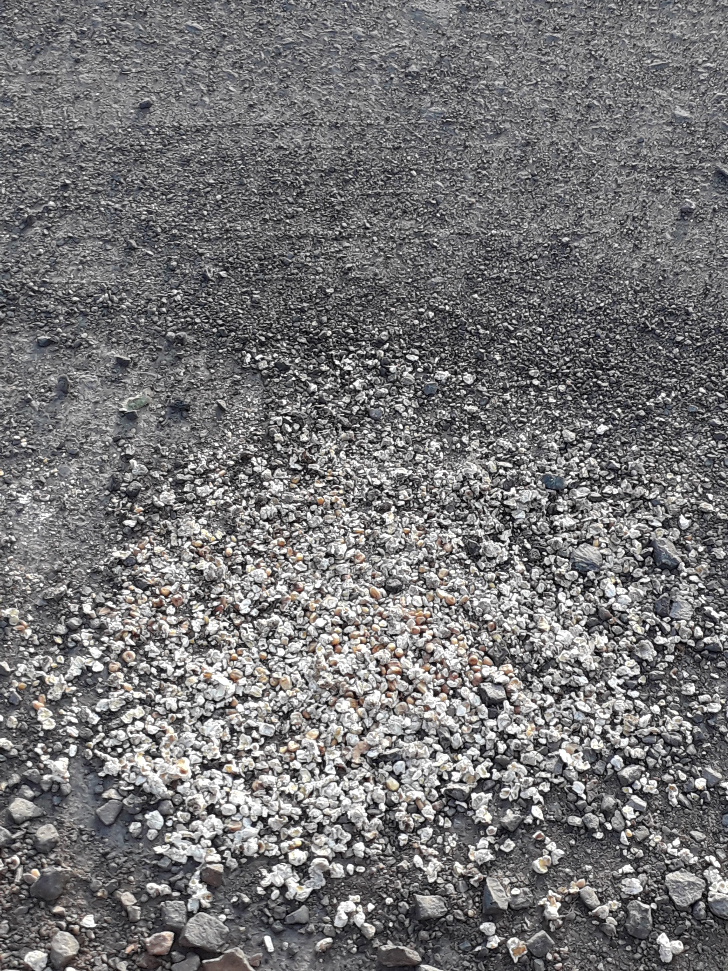 This might just look like popcorn spilled on the road, but it's actually the remnants of a sacrifice.