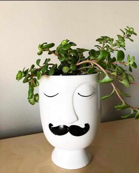 MustacheManSucculentPlanterCharlestonSC.png
