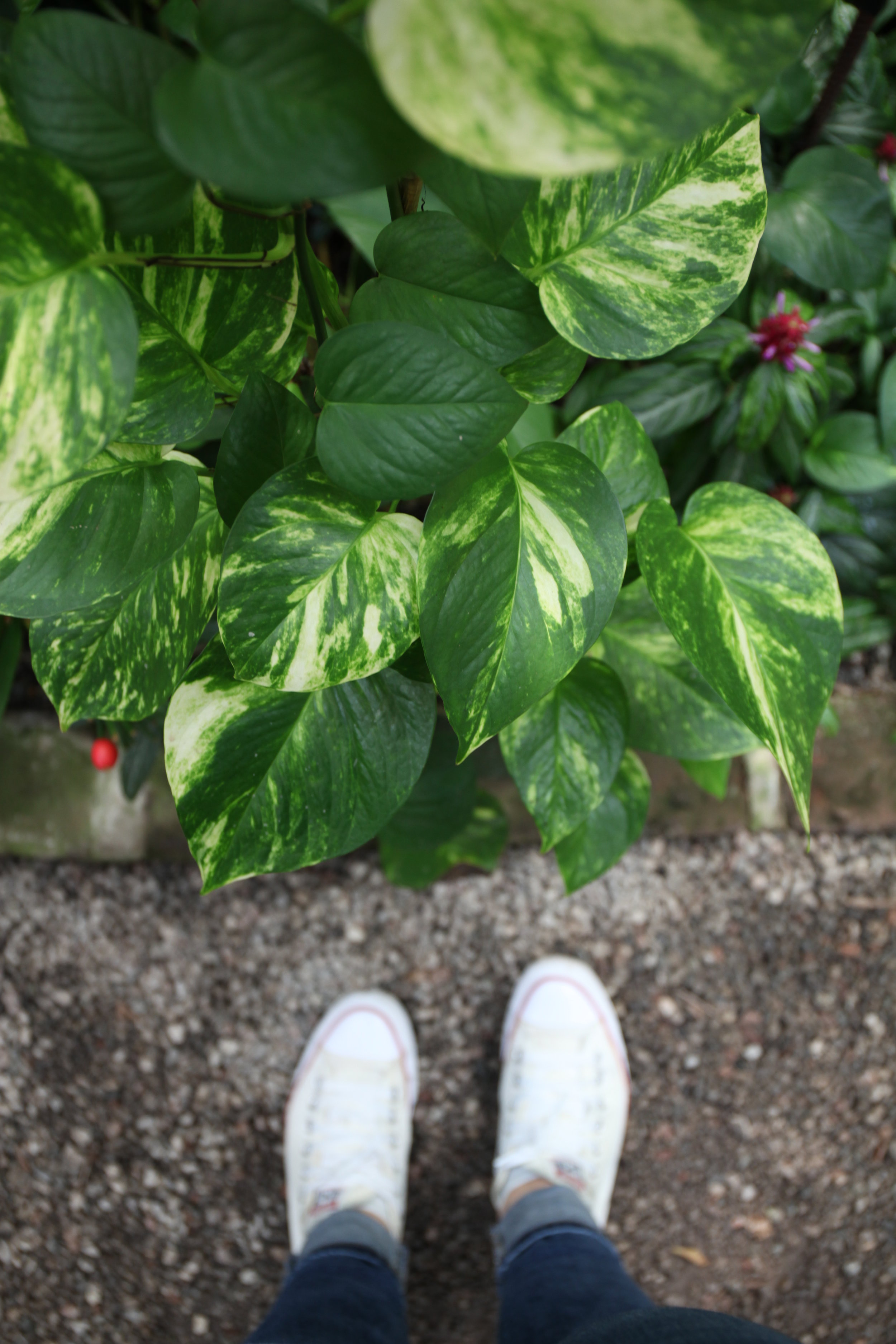 house-plants-charleston-sc-easy-care
