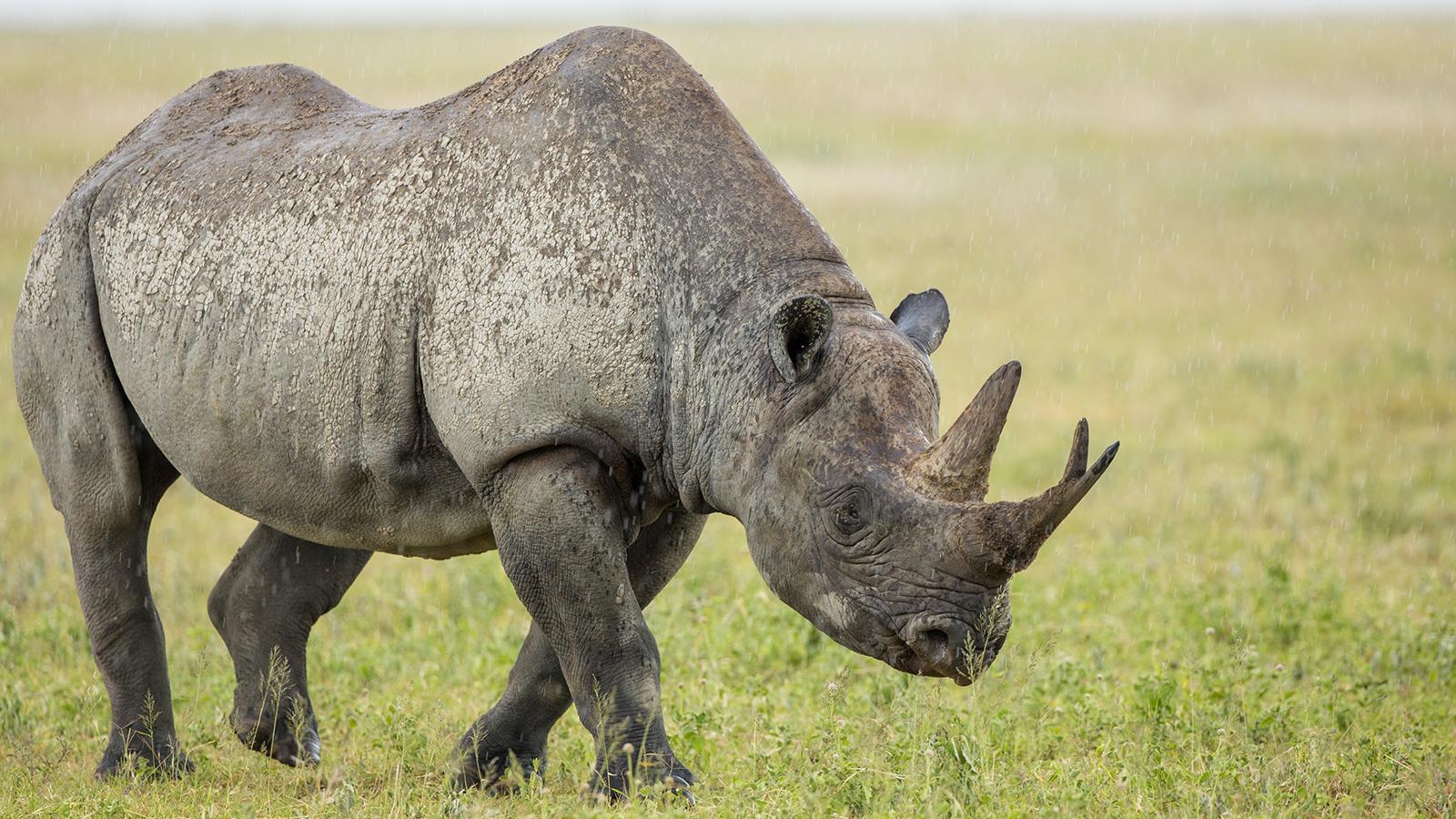 Rhino's farts