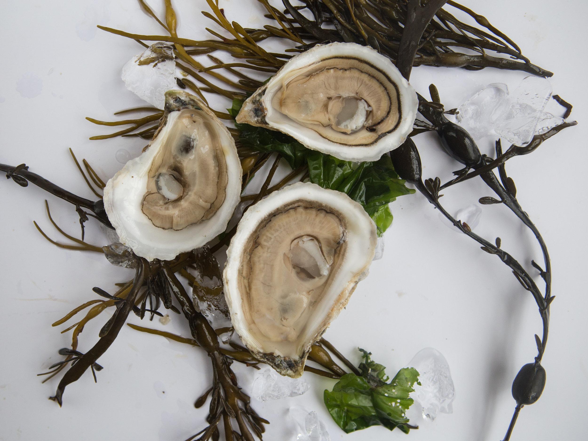 gpo oysters schucked on seaweed.jpg