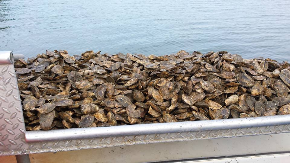 A great day of oyster farming is when…. - A light, southern breeze, sunny with temperatures in the sixties, a good crew and a boat full of Damariscotta farm-raised oysters