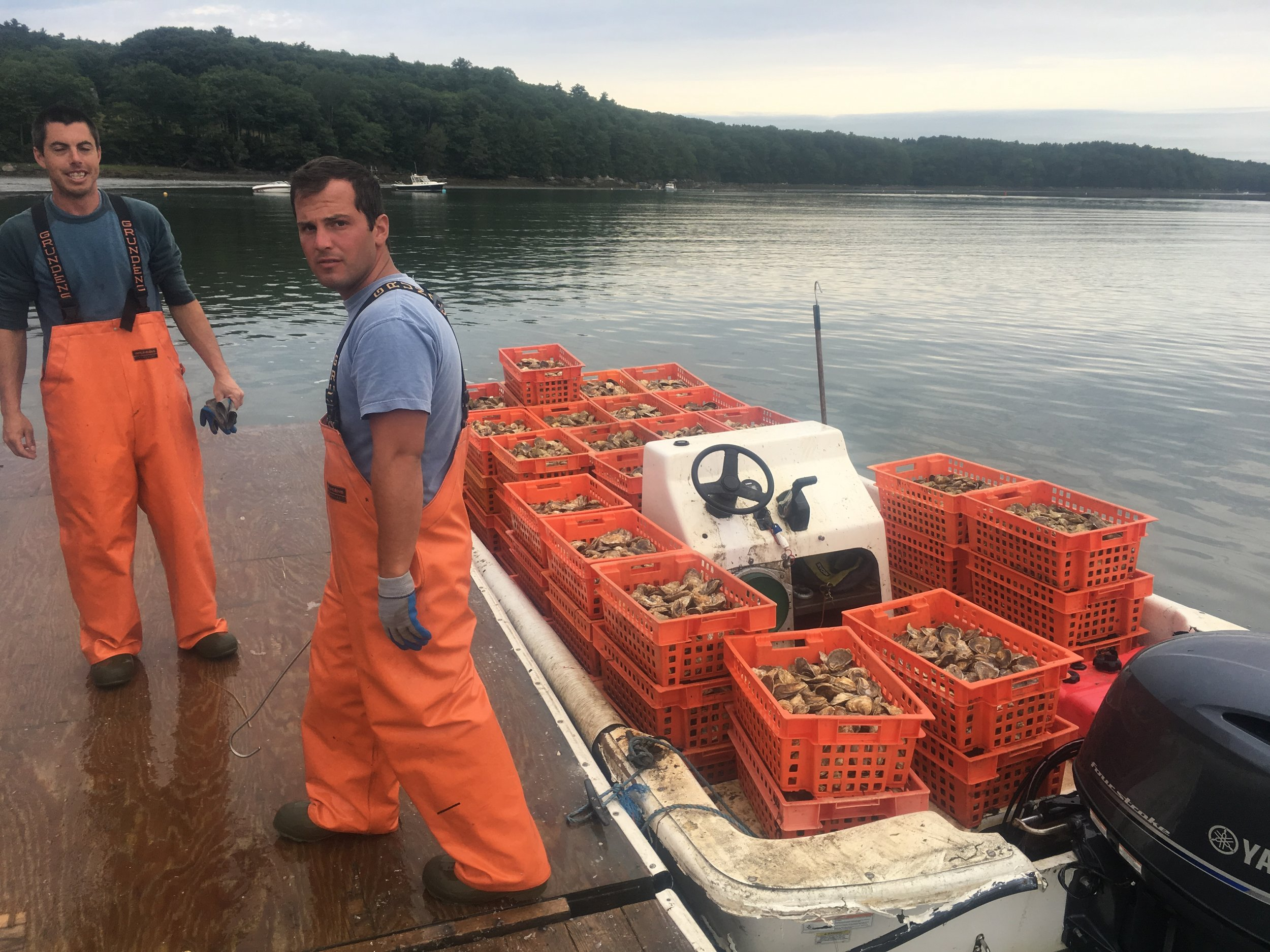 A great day of oyster farming is when…. - A great day of oyster farming is when…. the weather is good, the company is good and everything falls in place and runs smoothly.