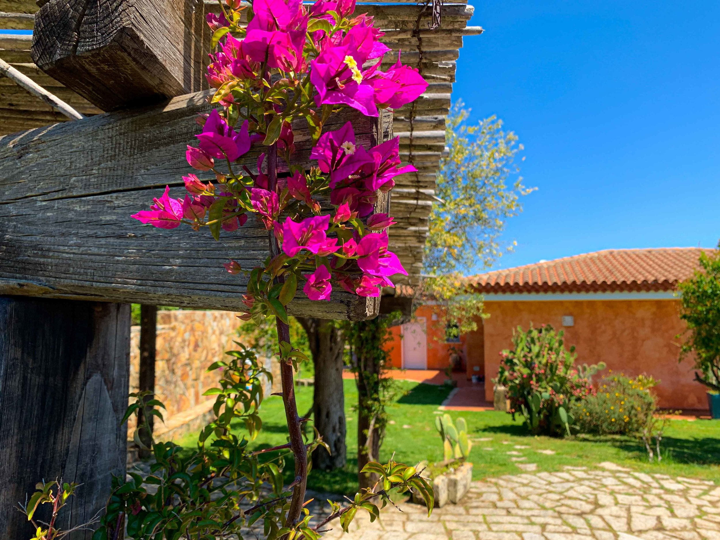 Villa Penelope flower-view