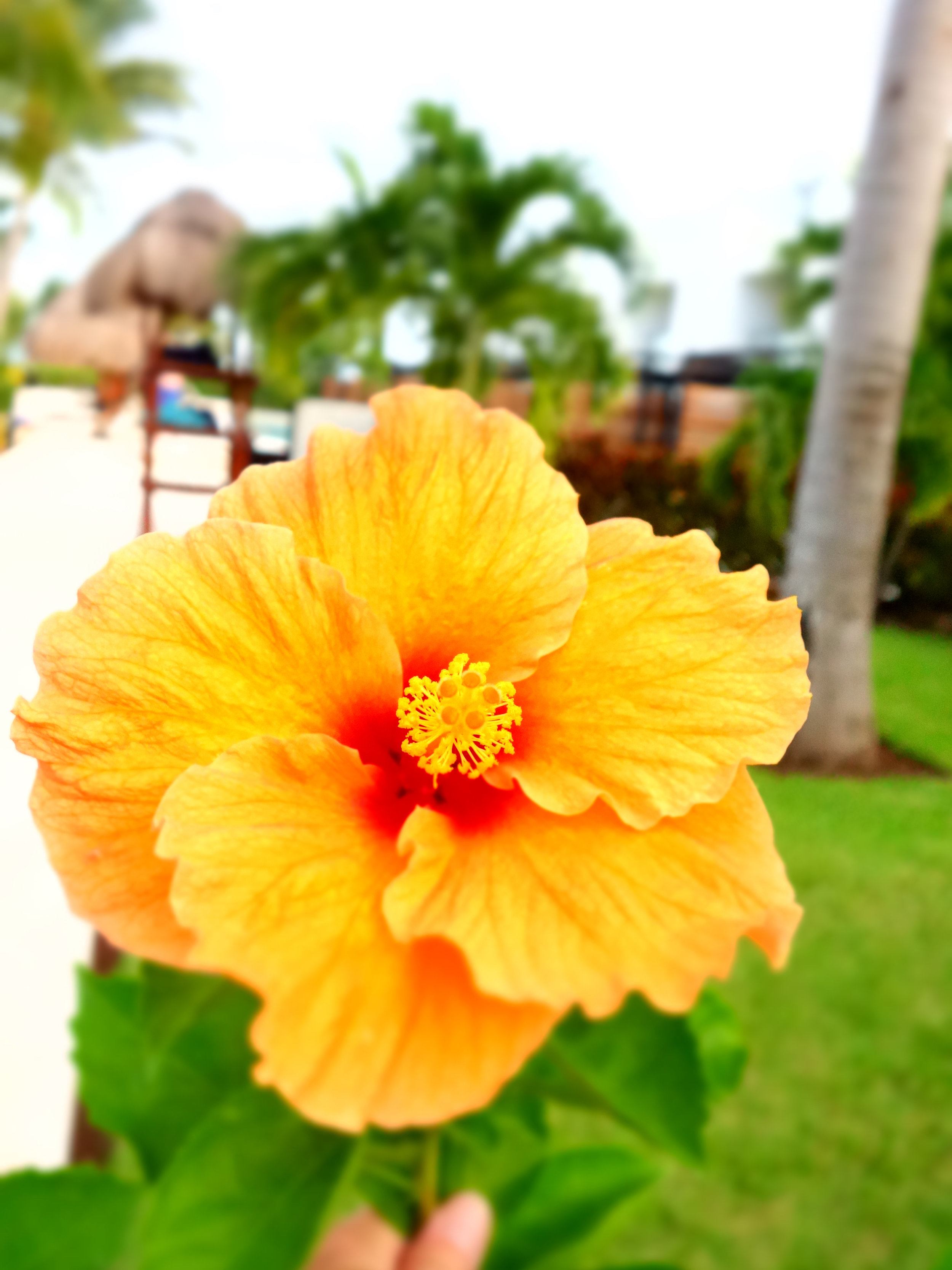 Finestflower.jpg