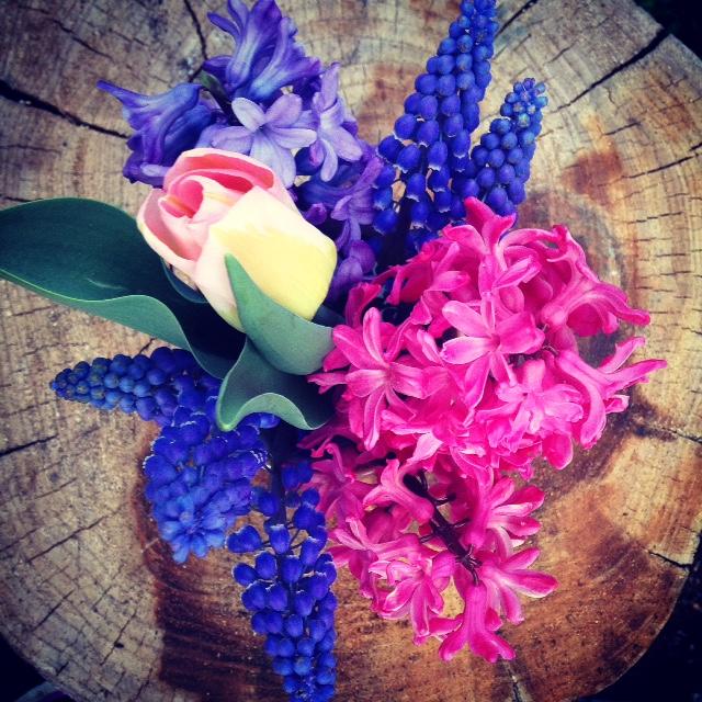 Spring Blooms.jpg