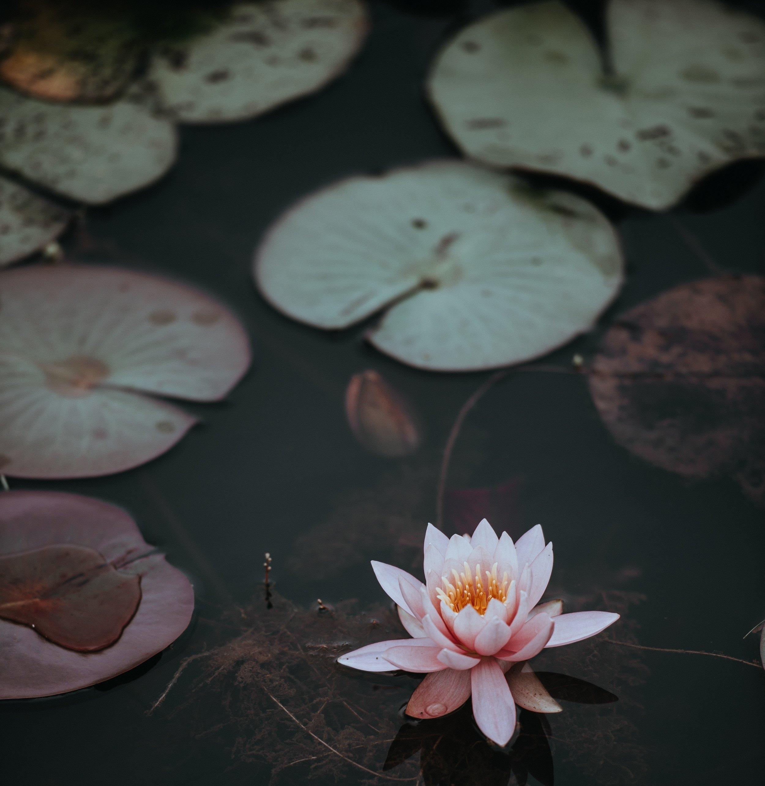 Water Quality Ponds -