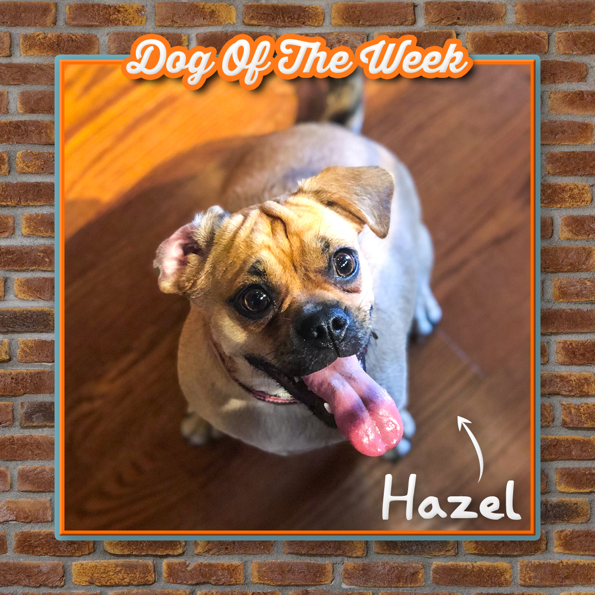 Hazel.jpg