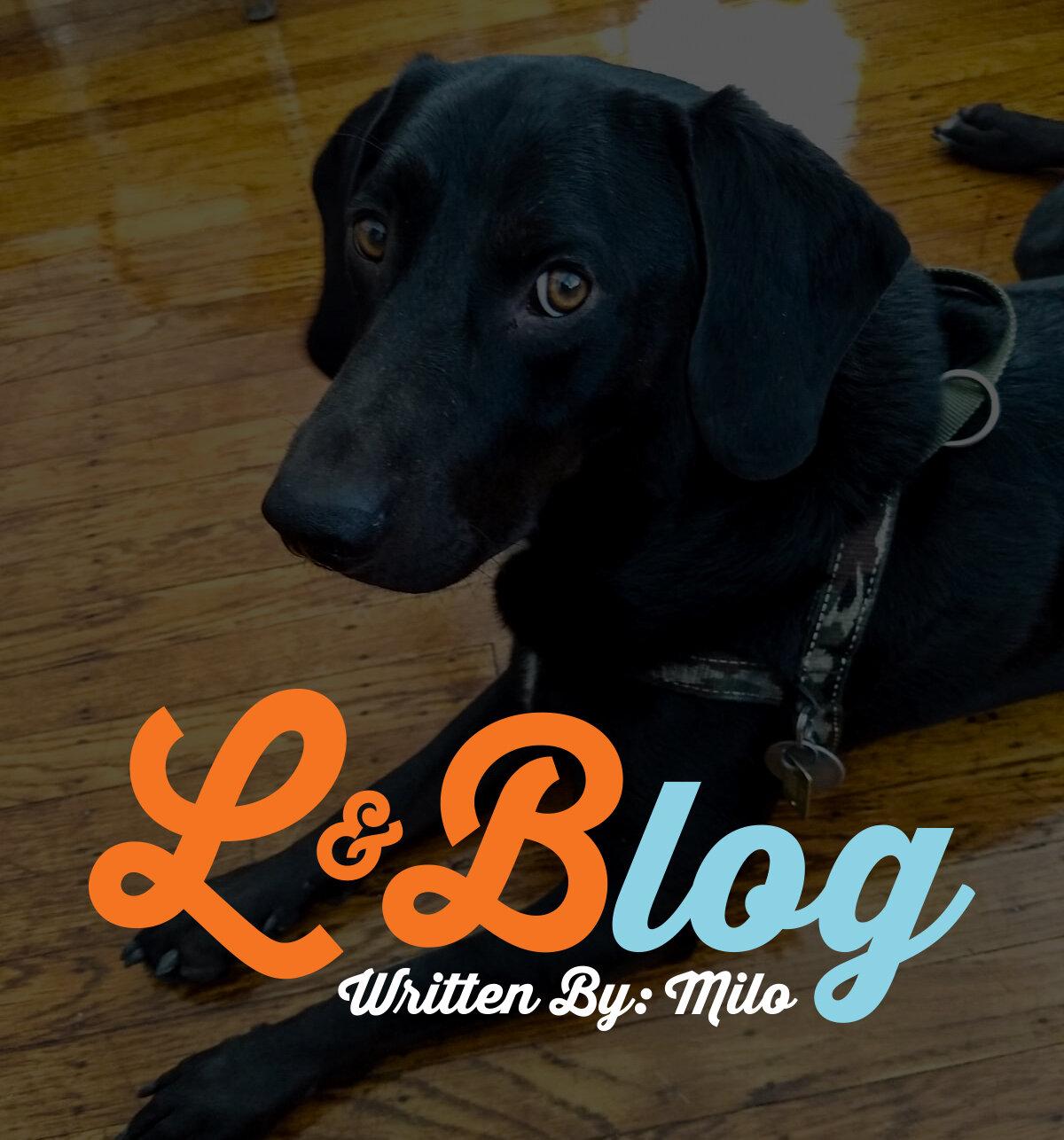 Milo Blog.jpg