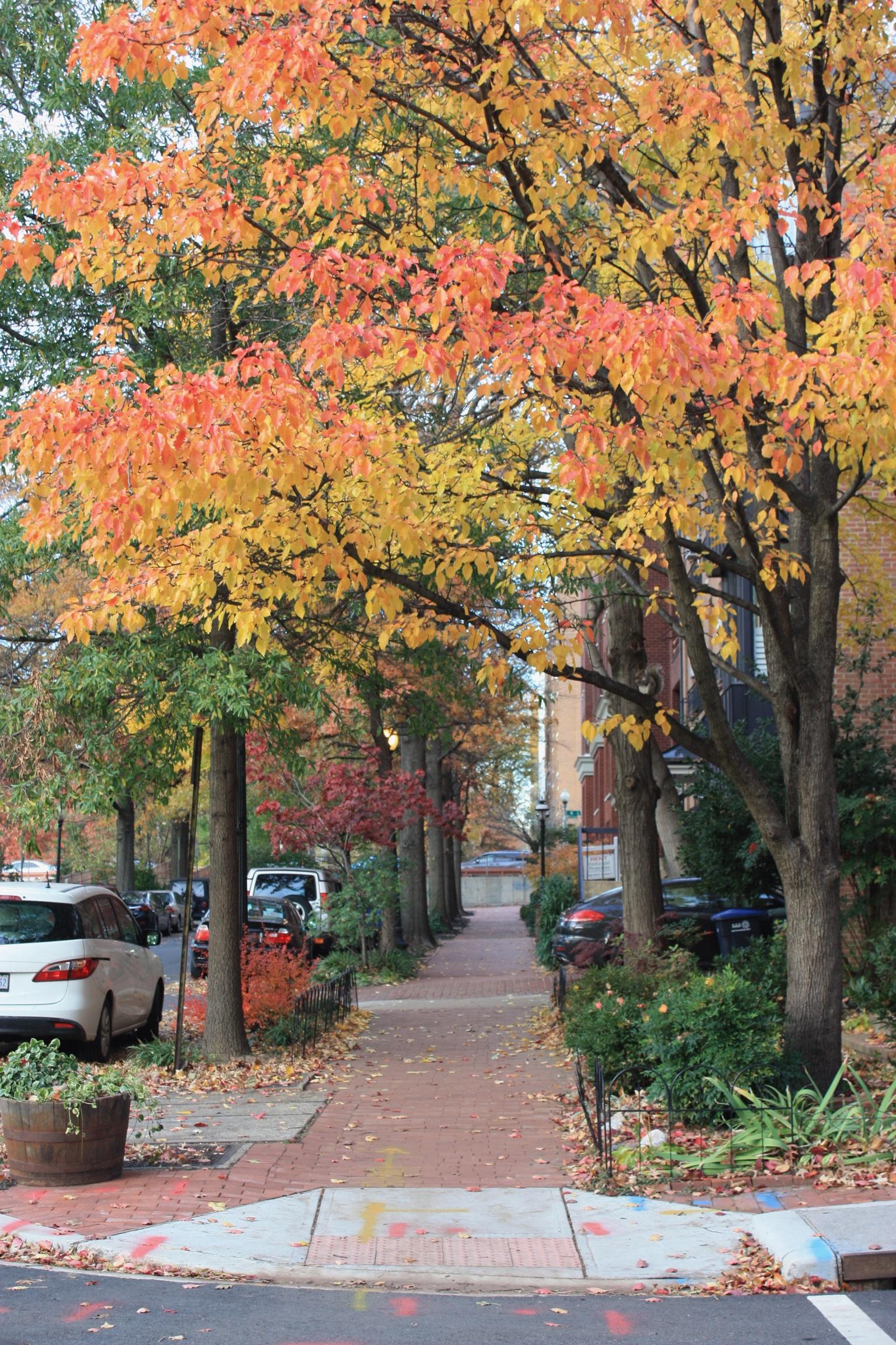 washington dc streets