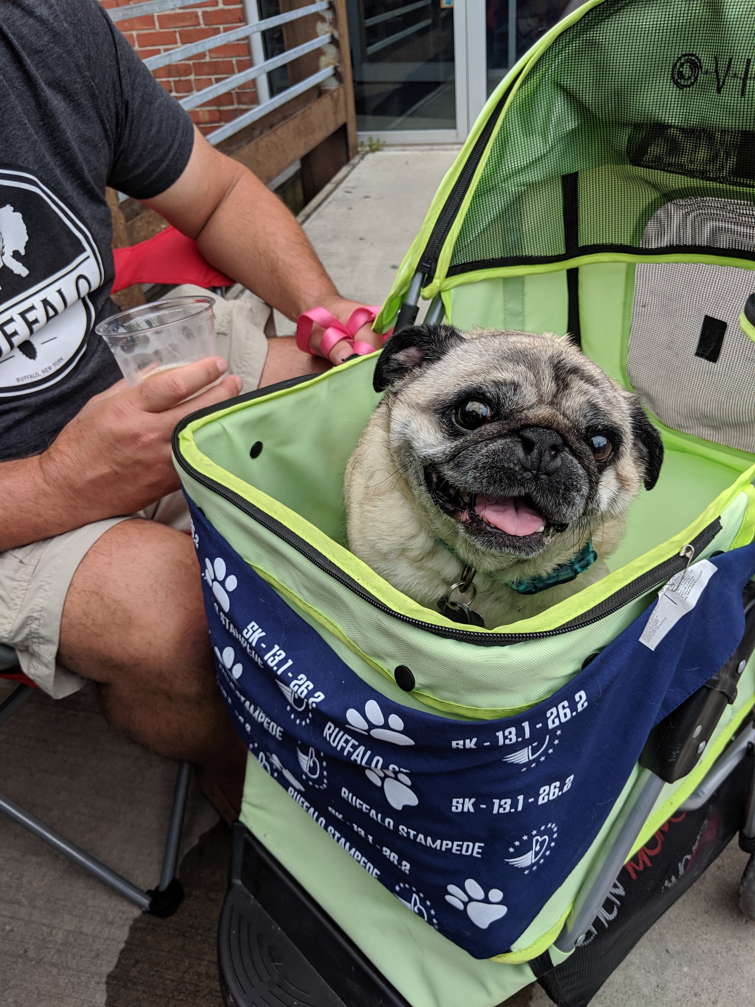 That pug in a stroller looks almost as happy to see me as I was to see her!