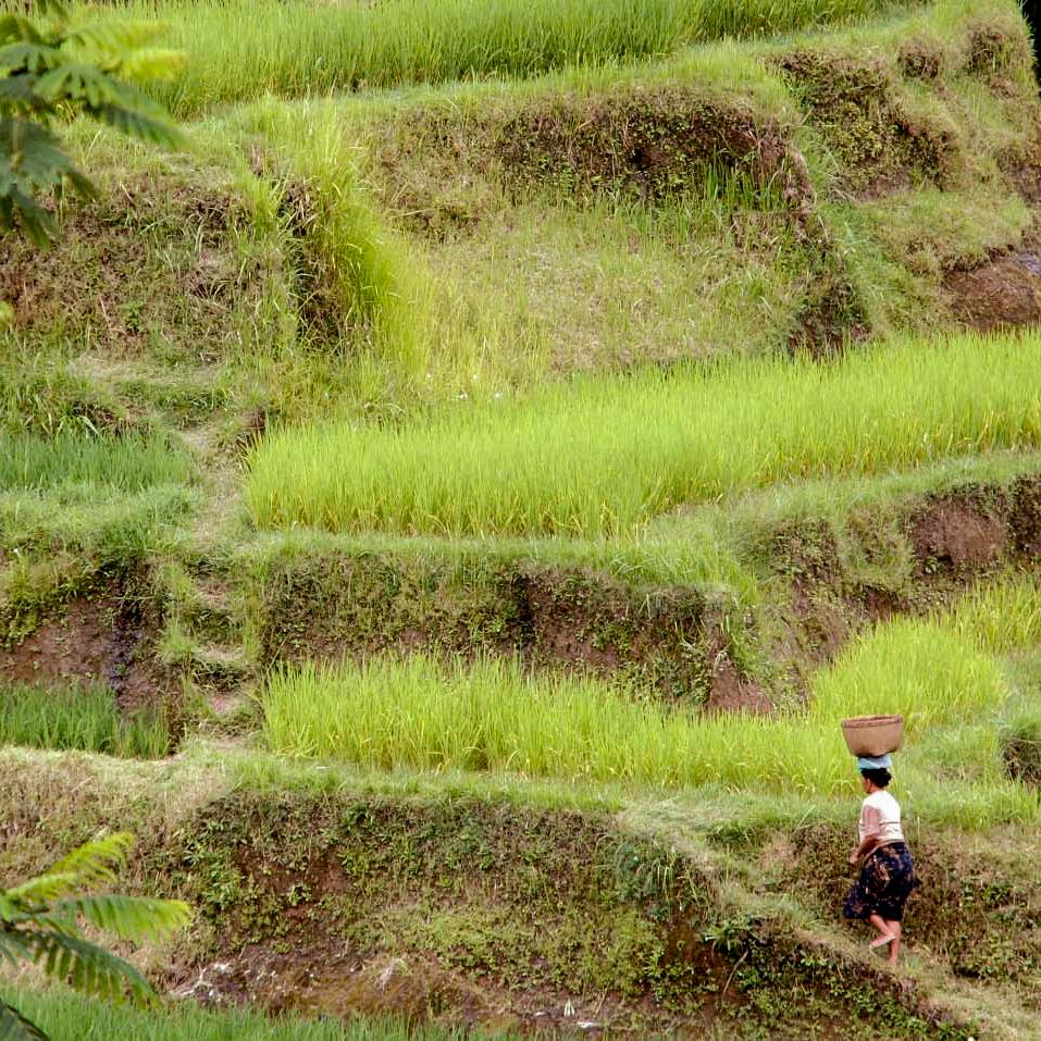 Bali-504.jpg