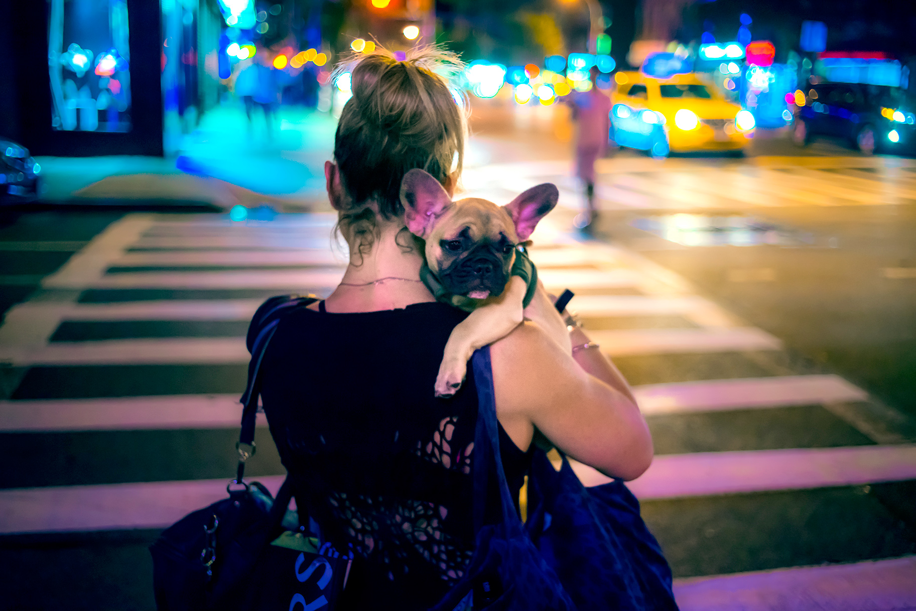 unleashed-nyc-dogs.jpg